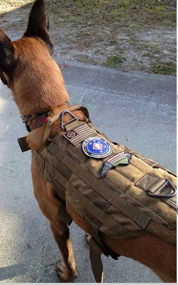 Chaleco k9 para perros talla l tan equipamiento - Novedades para mascotas ...